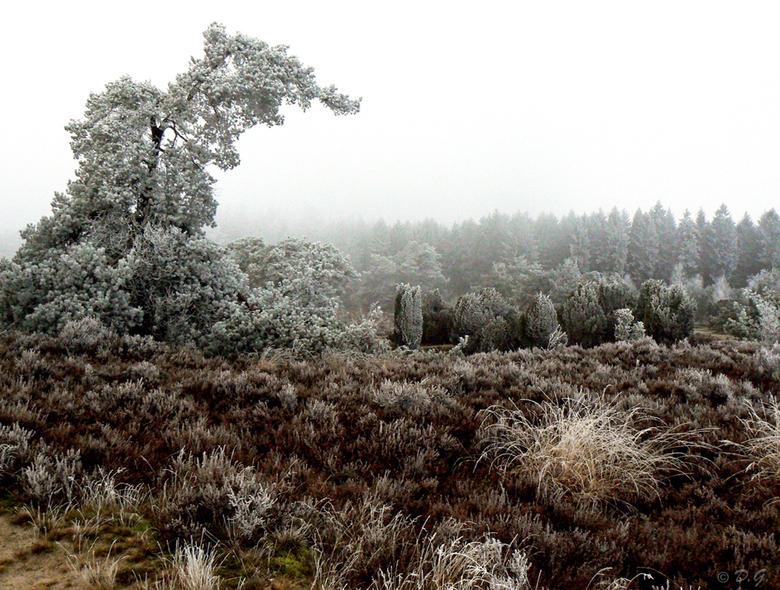 Crystal White - 21 december Echtener Zand<br /> <br /> We hebben inmiddels 2 prachtige dagen achter de rug. Een witte wereld waarin elk klein takje