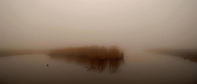 Mist in de polder.jpg - Foto twee weken geleden genomen in de polder bij simonshaven.