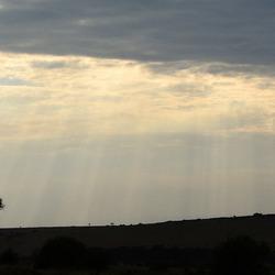 eenzame boom geniet van enkele zonnestralen