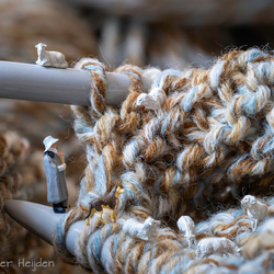 Schaapjes in de wol