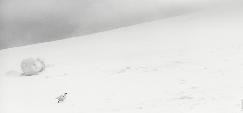 Sneeuwhoen Glencoe Mountain - Net terug van een fantastische fotoreis naar Glencoe Schotland. Wat een geweldig landschap daar! Terwijl ik bezig was me
