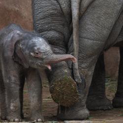 Tonya baby-elefantitis