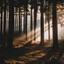 Zonnestralen in de mist