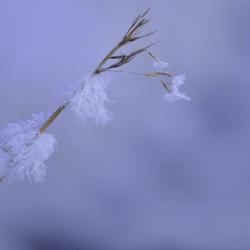 Bescheidde takje met sneeuw!