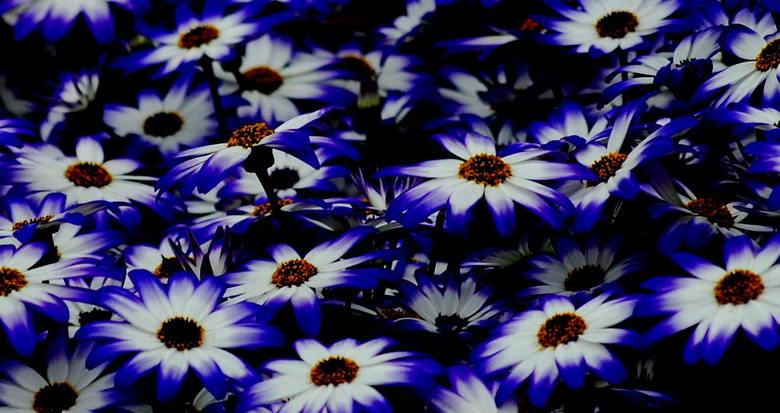 blauw wit - Ik vond deze blauw met witte bloempjes wel mooi. Ik heb de foto wel nog donkerder gemaakt waardoorhet wit er uit springt.