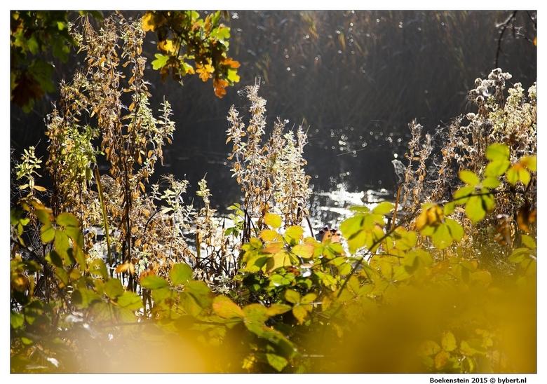 IMG_8982 Herfst serie -