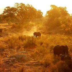 Avond in Kruger
