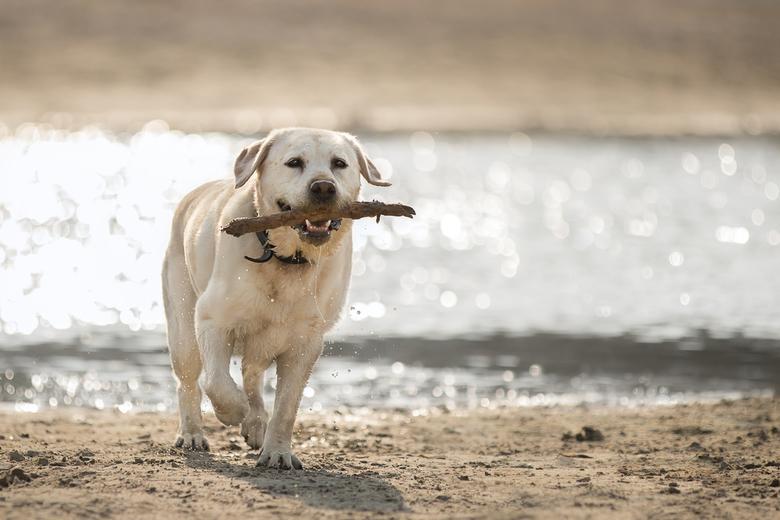 Hond bij het water - Nog even genieten van de laatste zomerdagen.