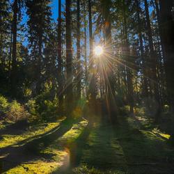 Heerlijke zon door de bomen