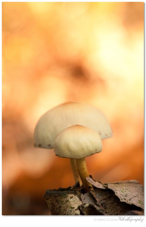 """Fungi Flavours - Nog eentje om het af te leren. <img  src=""""/images/smileys/smile.png""""/>"""