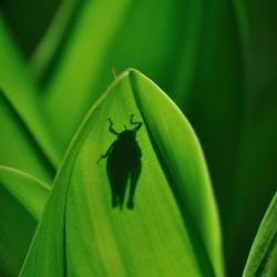 Cricket green
