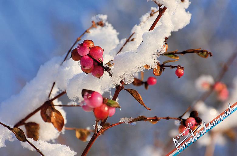 Winter in Zoetermeer - Winter in Zoetermeer