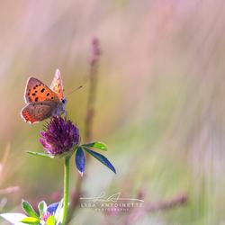 Lief klein vlindertje