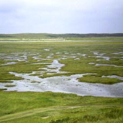 landschap in texel