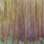 schilderen in een herfstbos