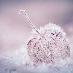 bevroren lampionnetje