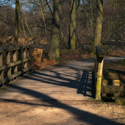 't Haagse Bos