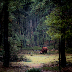 In the forest... (2)