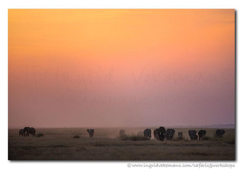 Amboseli Colours - De vlaktes van Amboseli bieden prachtige zichten op dieren die de vlaktes verlaten op zoek naar een plek waar het veiliger is om te