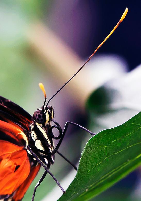 Vlinder - Vlinder op blad