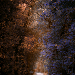 Road to magic forest