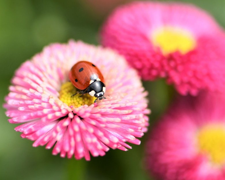In de tuin (1) - Heel fijn dat het macroseizoen weer is begonnen... we kunnen gewoon in eigen tuin leuke plaatjes schieten.<br /> <br /> Bedankt voo