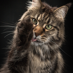 Cat'chy Images - The Finger