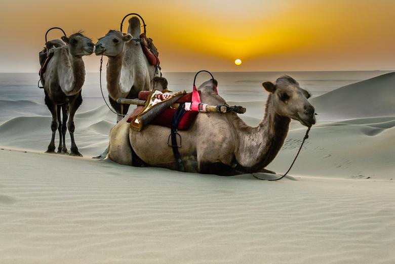 Desert taxi -