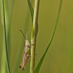 grasshopperfun