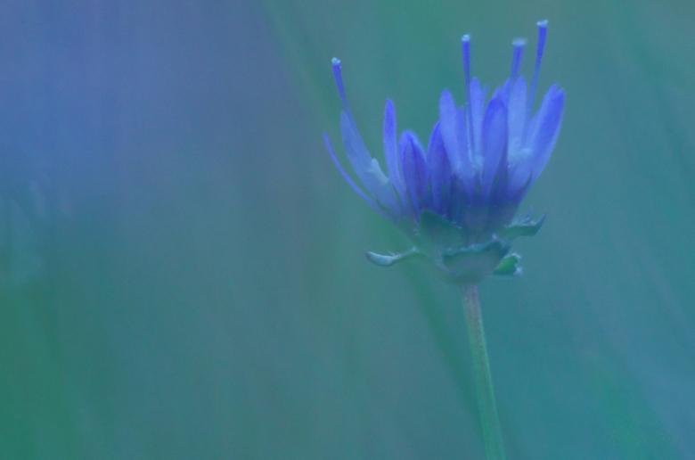 Door het gras - De soft focus op deze foto is ontstaan doordat ik de foto genomen heb door de graspluimen heen. Ik vond het resultaat met al die paste