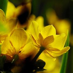 Zomers-Voorjaar