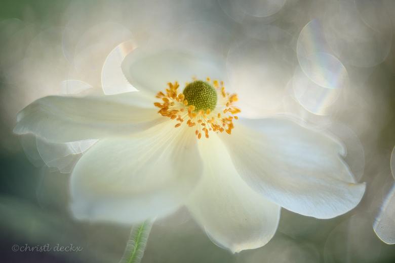 """Enlighted - Om de donkere dagen wat op te fleuren, niets beter dan een bloemetje <img  src=""""/images/smileys/wilt.png""""/> Dit komt uit mijn archief van"""