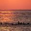 Zeehonden bij zonsondergang