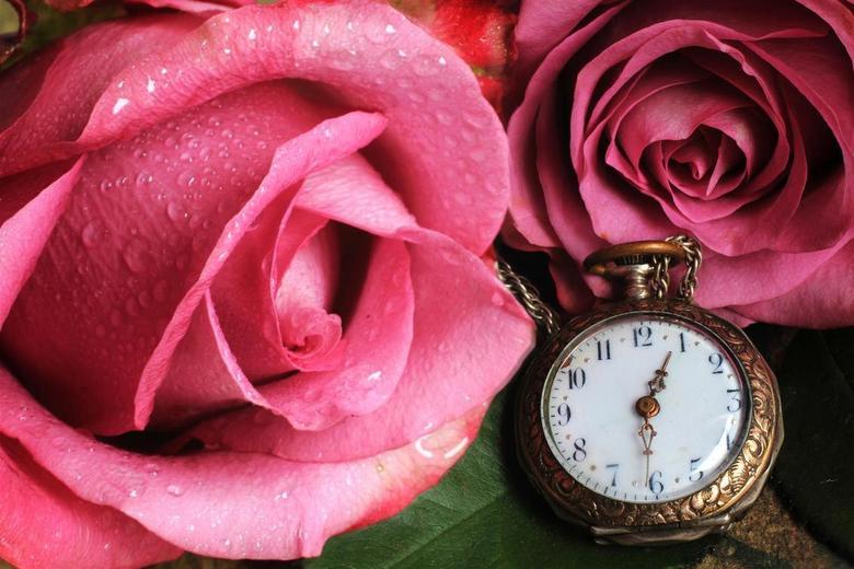 Time for pink roses  - Een traditioneel stilleven, zoals er eerder ook veel verjaardagskaarten te zien waren.