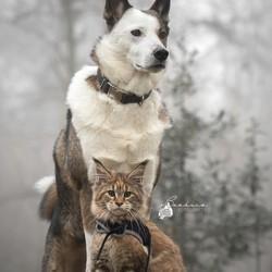 Leeuwin en Namilla