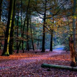 Herfst in het Wandelbos