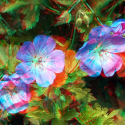 Bloemen 3D stereo