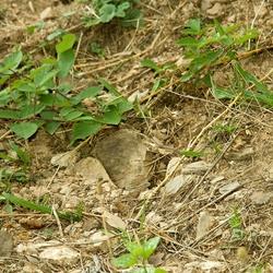 Foto van een hagedis die beschermd tussen twee stenen zit.