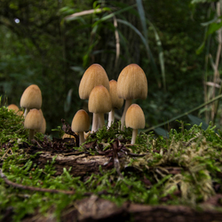 De vroege paddenstoelen