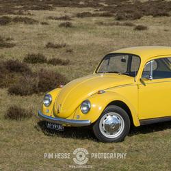 Yellow Beetle #2