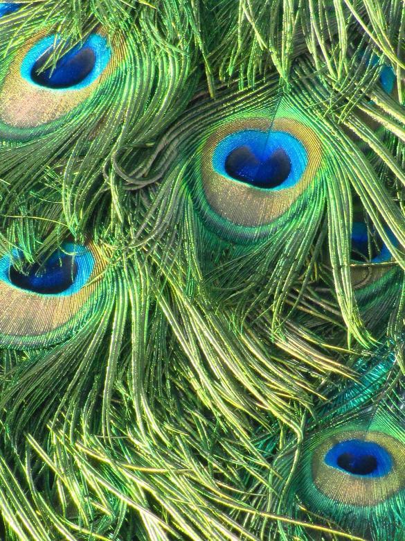 Eyes - Even wat pauwenveren dichterbij halen...