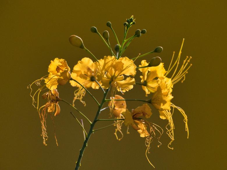 Beautybloem - Heb niks met bloemenfotografie maar eindelijk viel het kwartje...een bloem is mooi om te fotograferen mits ik de achtergrond in dezelfde