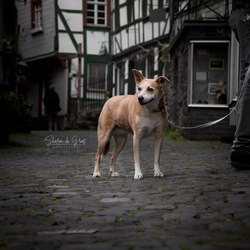 Dog in the streets
