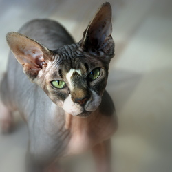 naakt - de ene kat is de andere niet