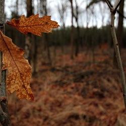 Blaadjes in de herfst