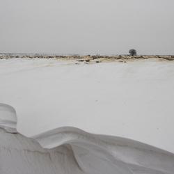 Serengeti in de Sneeuw