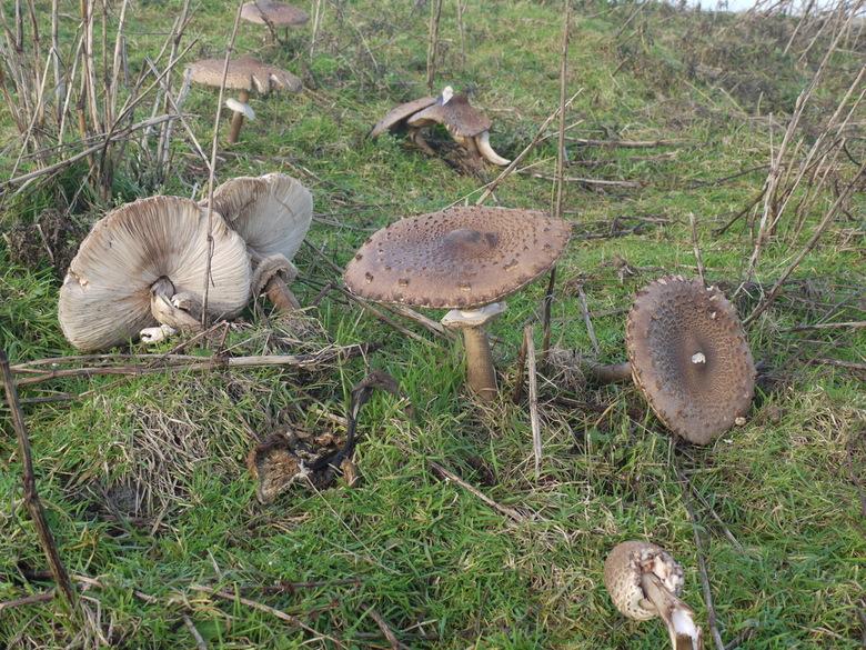 Natuurgebied 'Botgat' bij Grote Keeten (NH) -