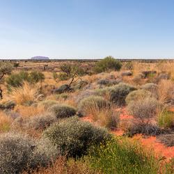 outback uluru