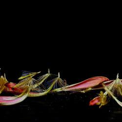 Bewerking: bloemblaadjes zonder steen............