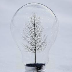 Winter Bulb